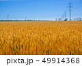 Golden Wheat Field and Power Line 49914368