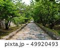 今帰仁村 49920493