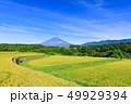 富士山 水田 稲の写真 49929394
