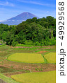田畑 風景 米の写真 49929568