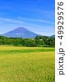 水田 稲 田畑の写真 49929576