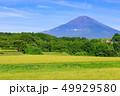 富士山 水田 稲の写真 49929580