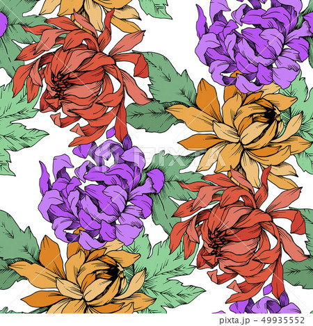 Vector Chrysanthemum floral botanical flowers. Engraved ink art. Seamless background pattern. 49935552