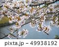 桜 49938192