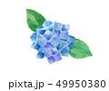 花 紫陽花 白バックのイラスト 49950380