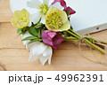 クリスマスローズ ヘレボルス 花の写真 49962391
