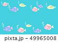 魚 海水魚 海のイラスト 49965008