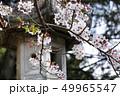 桜と灯籠 49965547