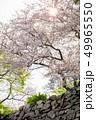 桜と石垣 49965550