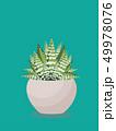 植物 ベクター 多肉植物のイラスト 49978076