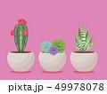 植物 ベクター 多肉植物のイラスト 49978078