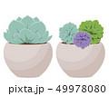 植物 ベクター 多肉植物のイラスト 49978080