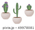 植物 ベクター 多肉植物のイラスト 49978081