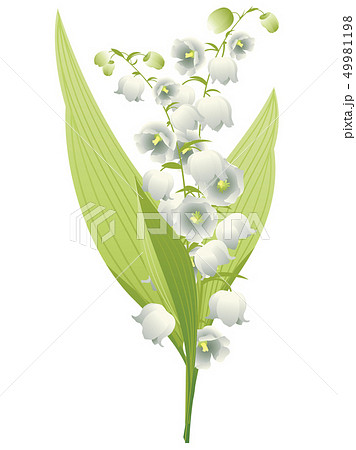 Lily of the Valley 49981198