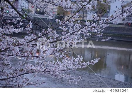 桜 49985044