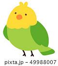 インコ アウトラインなし 49988007