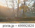 早朝 朝もや 鹿の写真 49992820
