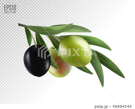 Vector realistic illustration of olives branch isolated on white background. 3d 49994544