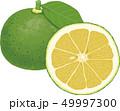 フルーツ 食材 果実のイラスト 49997300