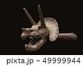 トリケラトプス頭部の骨・化石の写真|科学・生物|黒背景 49999944