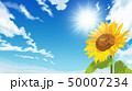 向日葵 ひまわり 花のイラスト 50007234