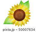向日葵 ひまわり 夏のイラスト 50007634
