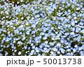 ネモフィラ 50013738