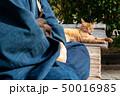 人物 動物 猫の写真 50016985