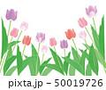チューリップ 花 花畑のイラスト 50019726