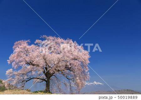 八ヶ岳連峰_わに塚の桜 50019889
