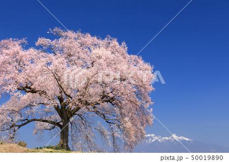 八ヶ岳連峰_わに塚の桜 50019890