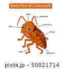 Diagram showing body part of cockroach 50021714