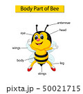 Diagram showing body part of bee 50021715