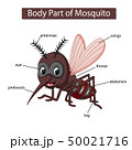 Diagram showing body part of mosquito 50021716