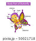 Diagram showing body part of butterfly 50021718