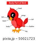 Diagram showing body part of red cardinal bird 50021723