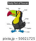 Diagram showing body part of toucan 50021725