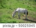 草を食べる白馬 50025045