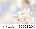 桜 花 春の写真 50025208