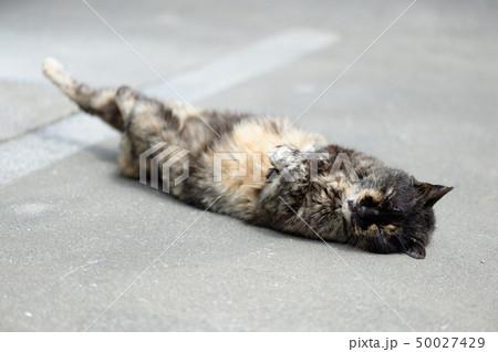寝転ぶ猫① 50027429