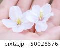 花 桃色 大学生の写真 50028576