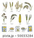 穀類 一粒 穀物のイラスト 50033284