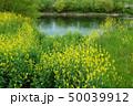 花 川 水の写真 50039912