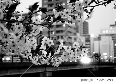桜 50041294