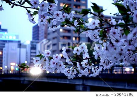 桜 50041296