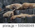 アラスカ トド 50048049