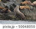 アラスカ トド 50048050