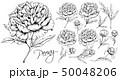Luxurious Peonies Set 50048206