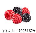 セイヨウヤブイチゴ ブラックベリー 西洋藪苺のイラスト 50056829