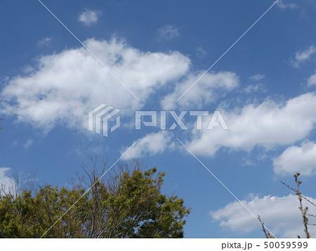 こじま公園での青空と白い雲 50059599